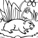 Printable Groundhog Coloring Page 6